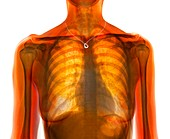 Woman's torso with necklace, composite X-ray