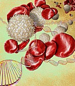 Blood disorder, conceptual image