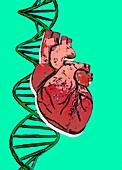 DNA strand and human heart, illustration