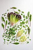 Various lettuce leaves and herbs on a white surface