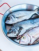 Fresh fish in a metal pan