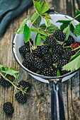 Fresh blackberries with leaves in an enamel saucepan