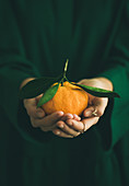 Fresh raw tangerine citrus fruit in hands