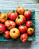 Tomato harvest on wooden box