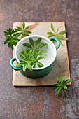 Fresh woodruff in a ceramic pot