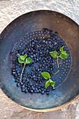 Frisch gewaschene wilde Blaubeeren und Minzblätter in antikem Sieb auf Steinuntergrund