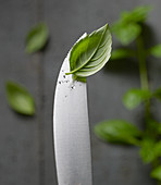 A basil leaf on a knife tip with water droplets