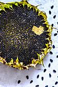 Reife Sonnenblume mit herzförmig ausgezupften Sonnenblumenkernen