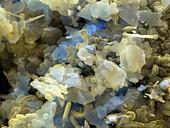 Silber und Polymer