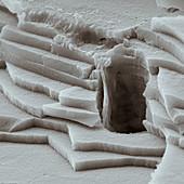Abalone Bruch 12000x - Seeohr, 12 000x