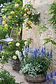 Terrasse mit Rosenstamm und Mehlsalbei