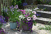 Arrangement aus Balkonblumen und blühendem Schnittlauch