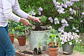 Frau pflanzt Kräuter und Gemüse in Topf