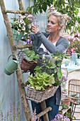 Balkonblumen und Gemüse in Körben an Holzleiter aufgehängt