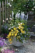 Blau - gelb bepflanzter Kübel mit Balkonblumen