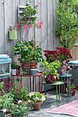 Terrasse mit Erdbeeren und Balkonblumen