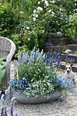 Blau - weiß bepflanzte Schale mit Mehlsalbei, Männertreu und Zauberschnee