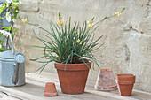 Die Brenngeleepflanze ist eine afrikanische Heilpflanze