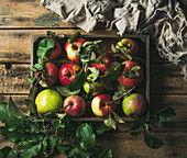 Seasonal garden harvest colorful apples with green leaves in wooden tray over rustic wooden background