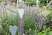 Holz-Herzen als Dekoration vor Lavendel