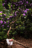 A plate with fruit (apple and pears)on a tree from purple rhododendrons in the wood