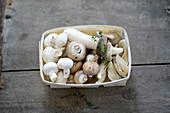 Frische Champignons, Egerlinge, Austernpilze und Austernseitlinge