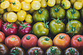 Freshly harvested tomatoes: red peach, green zebra, Silesian raspberry, lemon grape