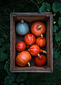 Various pumpkin in a wooden box