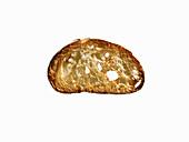 Eine Scheibe Ciabatta-Toast