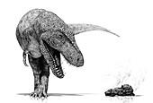 Tyrannosaurus rex and coprolite, illustration