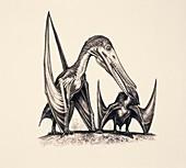Ornithocheirus pterosaurs, illustration