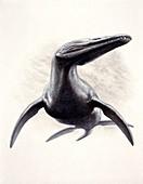 Rhomaleosaurus prehistoric marine reptile, illustration