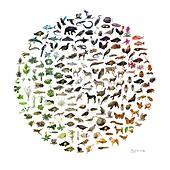 Biodiversity, conceptual illustration