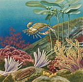 Palaeozoic underwater reef, illustration