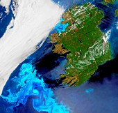 Phytoplankton bloom off Ireland, satellite image
