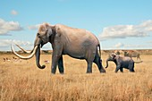 Columbian mammoth, illustration