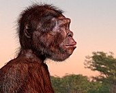 Homo naledi female, illustration