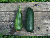 Zwei grüne Zucchini auf Holztisch im Garten