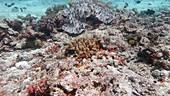 Tropical fish in Indian Ocean