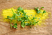Fresh chickweed on a wooden surface