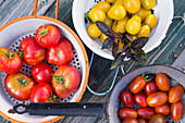 Freshly harvested colourful tomatoes in enamel colanders garnished with red basil