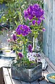 Violette Blüten von Flammenblume, Ziest und Oregano mit Gräsern in Flaschen
