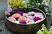 Rosenblüten schwimmen in Kupferschale