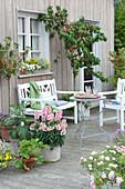 Terrasse mit Pfirsichbaum, Johannisbeeren, Erdbeere und Aubergine