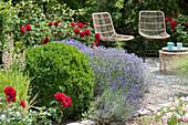 Beet mit Lavendel 'Hidcote Blue', Buchsbaum und roten Rosen 'Till Eulenspiegel'