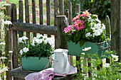 Alte Schubladen bepflanzt mit Nelken, Zinnie und Schnappmäulchen