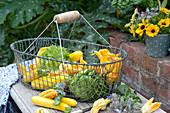 Frisch geerntete Zucchini,  Zucchiniblüten und Salat im Drahtkorb