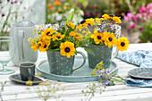 Kleine Sträuße aus Sonnenhut , Fenchel-Blüten und Borretsch