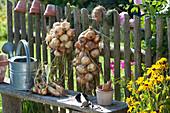 Zwiebelzöpfe am Zaun zum Trocknen aufgehängt