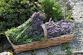 Korb mit frisch geschnittenem Lavendel am Beet